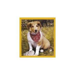New Magnetic Bookmark Collie Puppy High Quality Modern