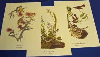 Audubon Best Loved Bird Paintings   18 Prints   1970s