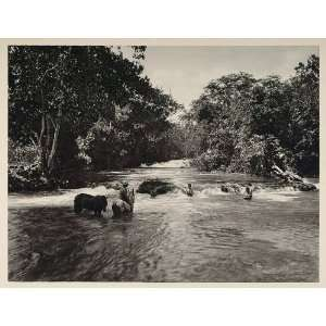 Blanco River Honduras Ceiba   Original Photogravure: Home & Kitchen