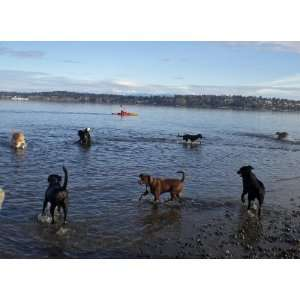Dogs at the Beach Blank Note Cards with envelopes  set of