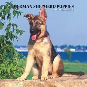 German Shepherd Puppies 2007 Calendar (9781421607061