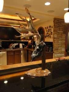 10 pt BRONZED SKULL Mule Deer Pedestal Mount VELVET on Antlers SHEDS