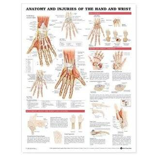 Anatomy and Injuries of the Hand and Wrist …
