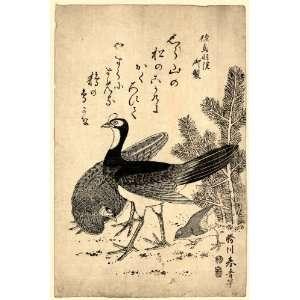 1804 Japanese Print wild birds and a young pine tree. Komatsu ni